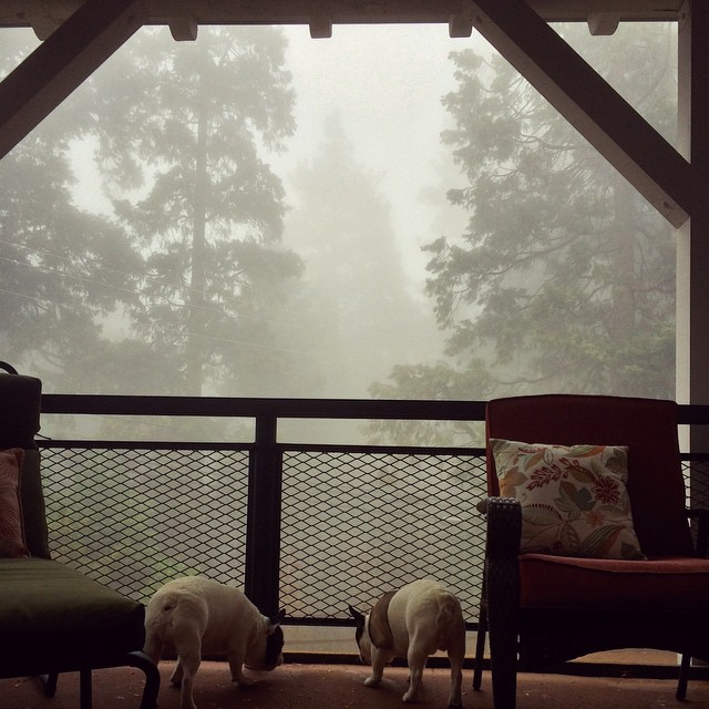 fog through the trees off the deck