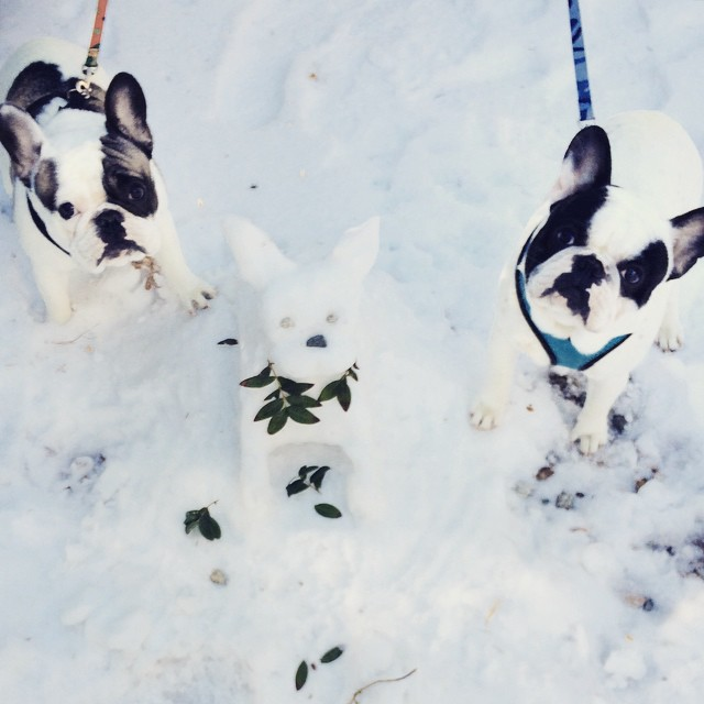 french bulldogs in the snow