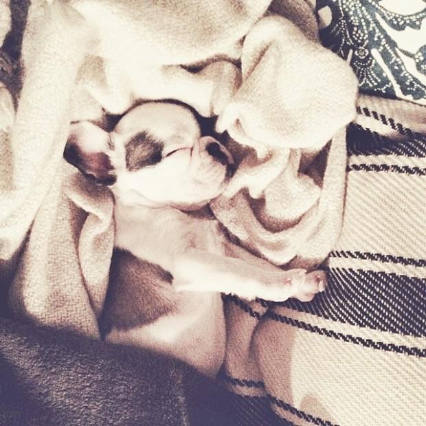 frenchie sleeping