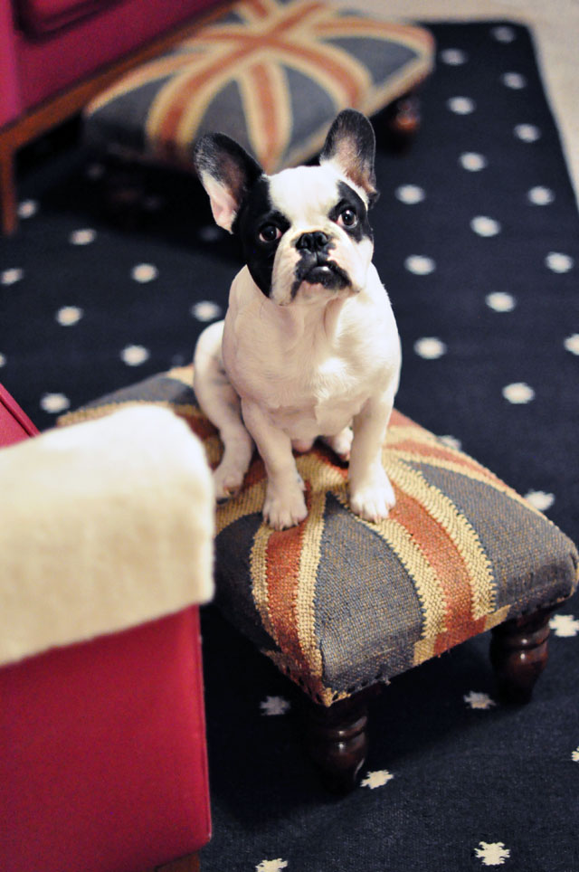 frenchie- union jack ottoman-dotted rug