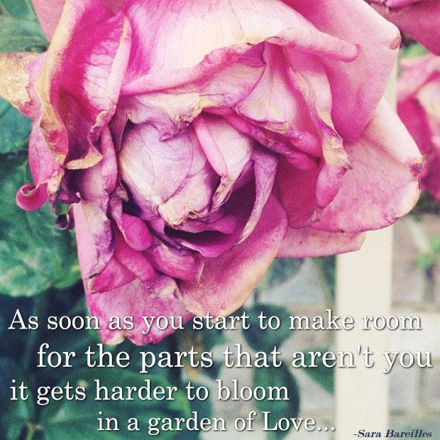 garden of love-wilted rose
