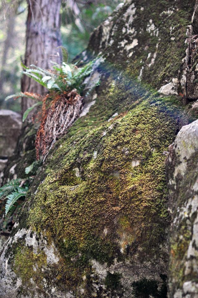 heart rock trail crestline-mossy rocks