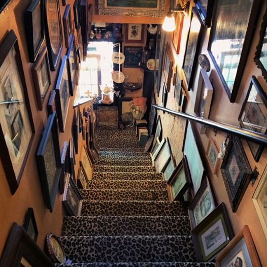 leopard carpet-stairs line with picture frames