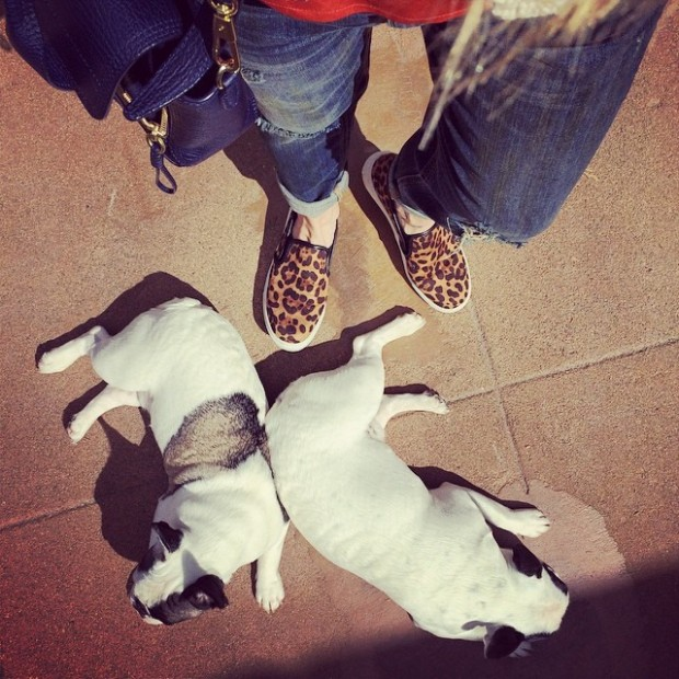 leopard sneakers lazy puppies