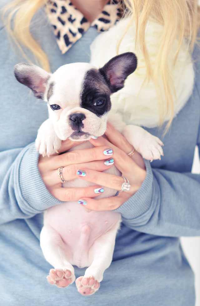 nail art + Randy the frenchie puppy model
