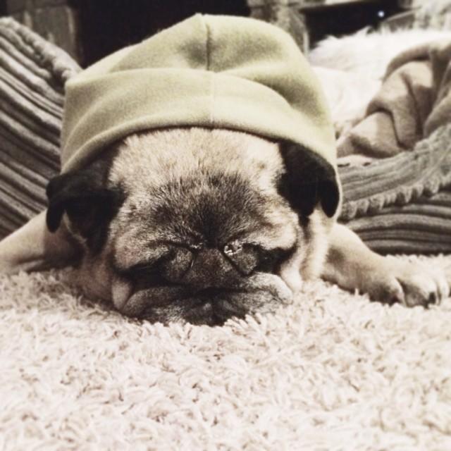 old pug in hoodie sweatshirt
