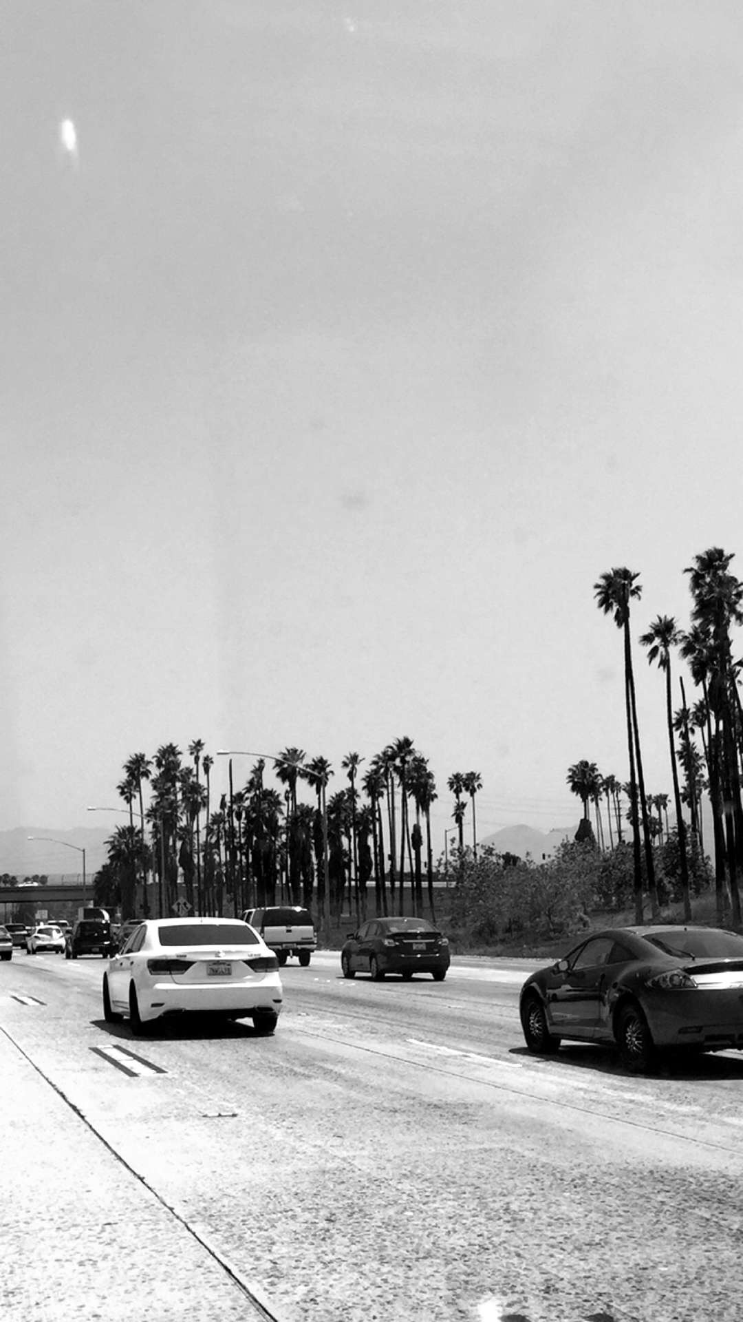 palms off the freeway