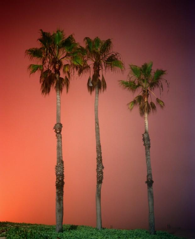 palms.dockweiler.12.12
