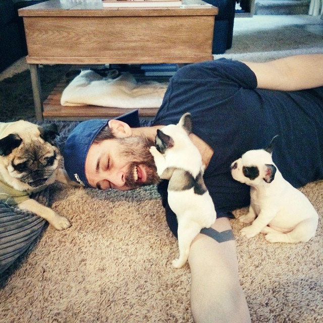 puppies and pug