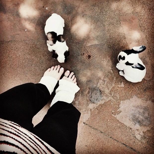puppies at my feet