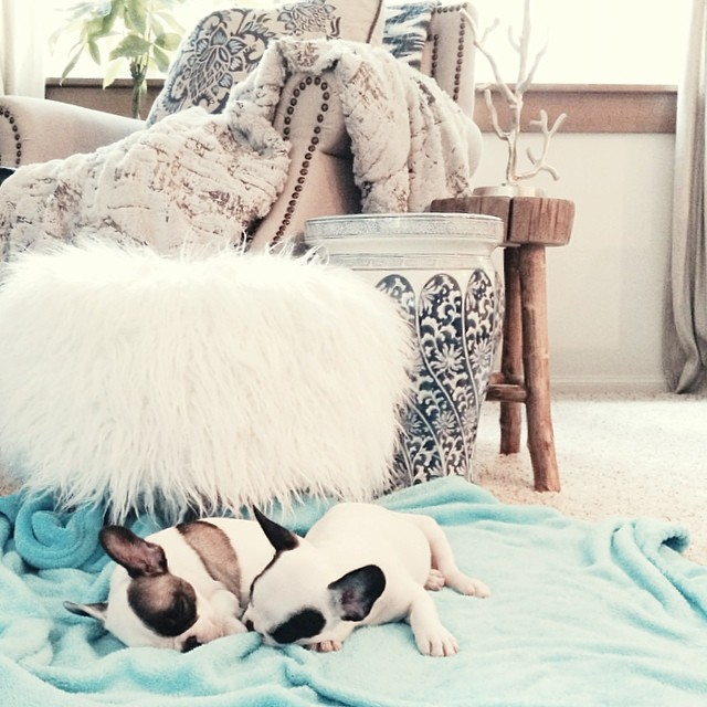 puppies napping in living room
