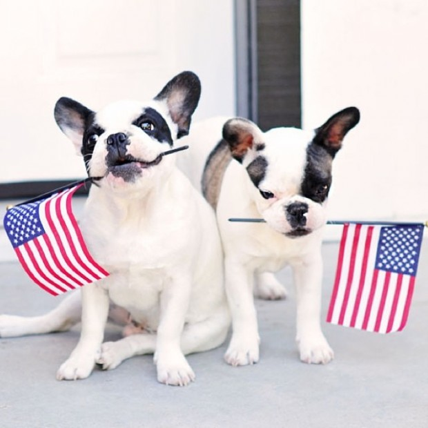 puppies with flags