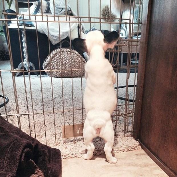 puppy jail