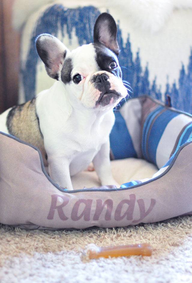 randy personalized bed