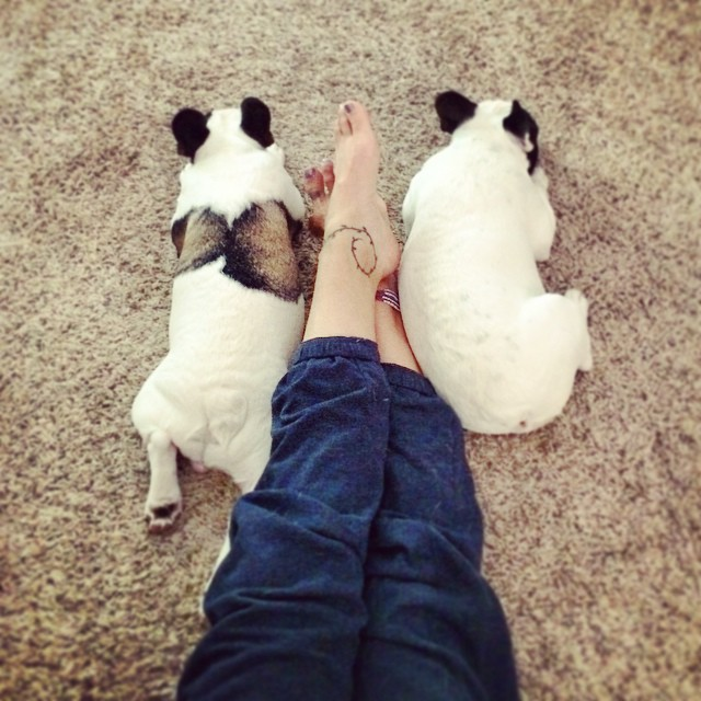relaxing with dogs
