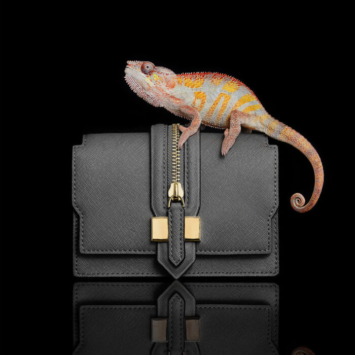reptile-still-life-photographer-london-chameleon-handbag-fashion-clutch-bag