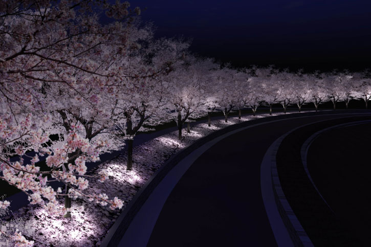 glowing cherry blossom trees