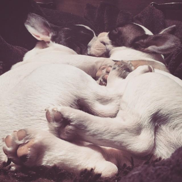 sleepy snuggle puppies