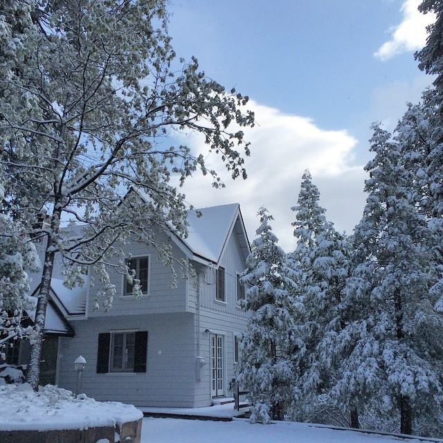 snow covered trees and house