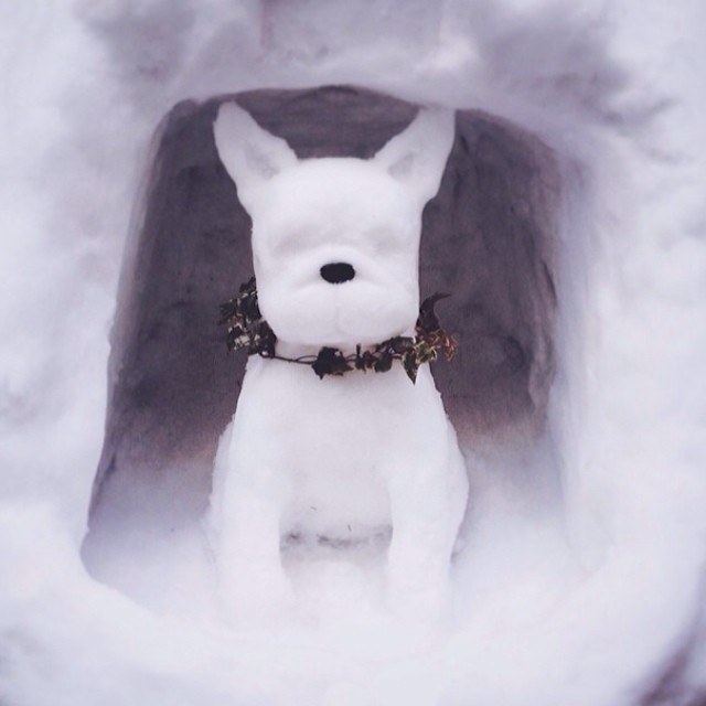 snowdog snow frenchie