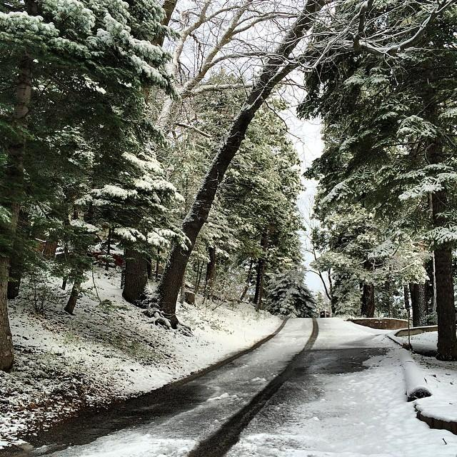 snowy road and trees