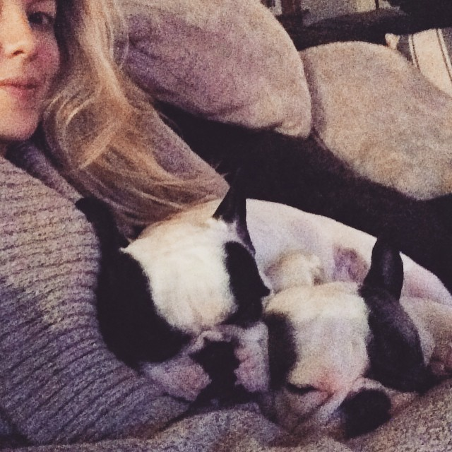 snuggly french bulldogs