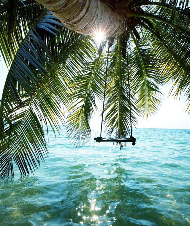 swing from palm over water