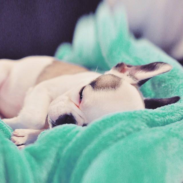tiny puppy sleeping