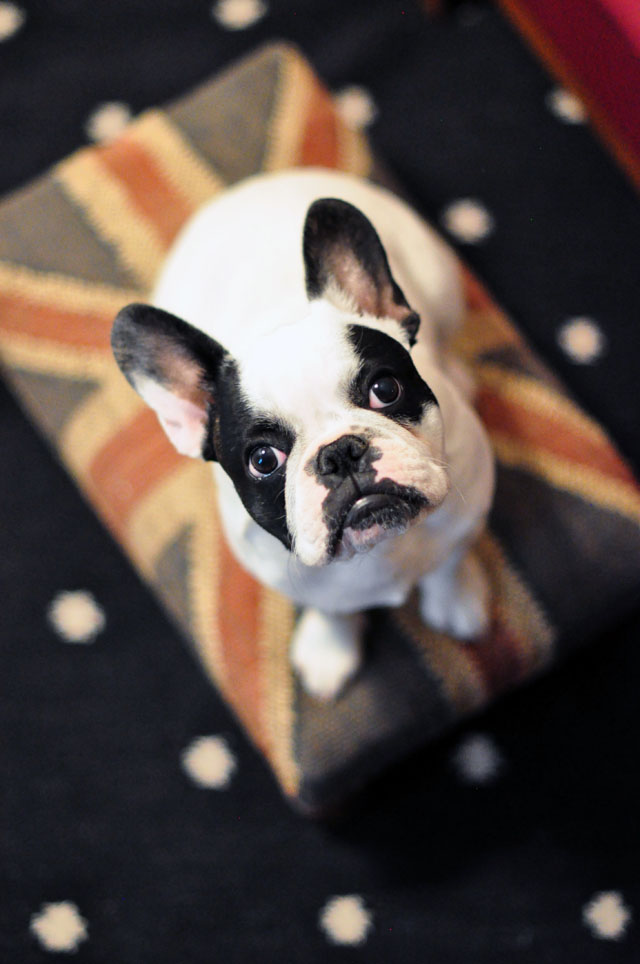 trevor-frenchie -union jack ottoman-dotted rug