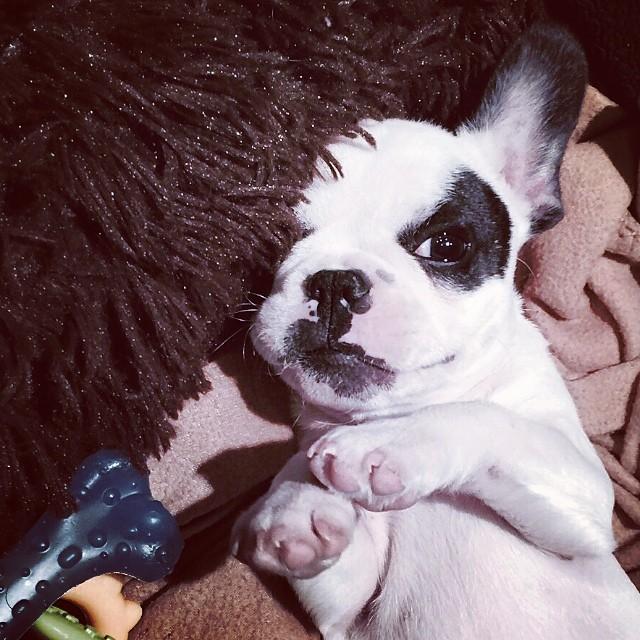 trevor puppy head