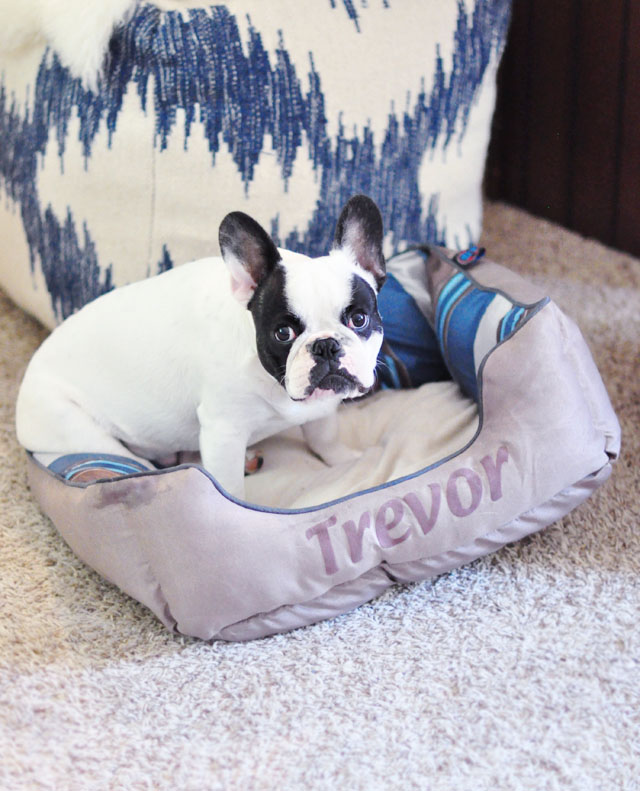 trevor's bed