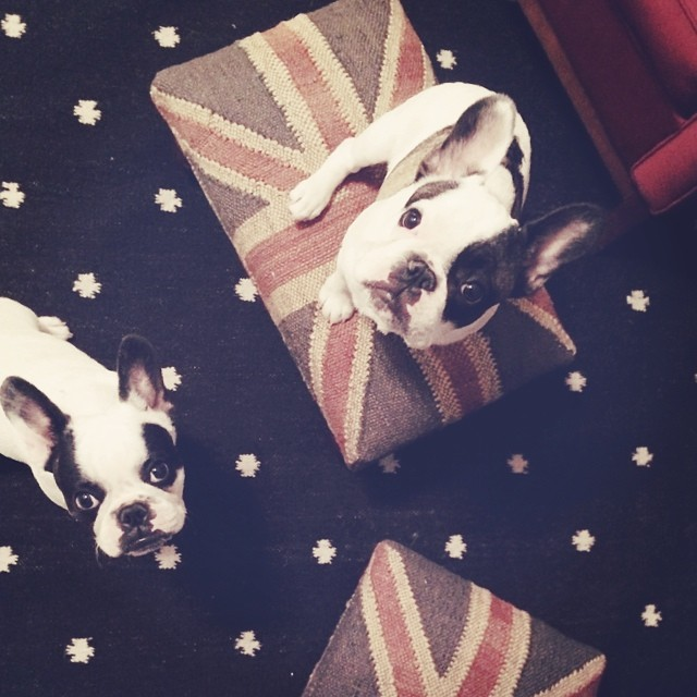 union jack stools and french bulldogs